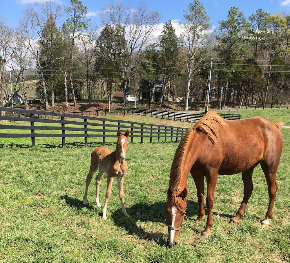 When naming her foals, Anne Neil likes to pay homage to the foal's lineage in creative ways.