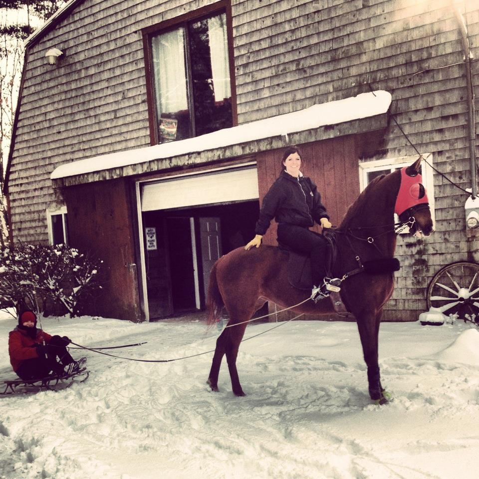 For those who live in snowy areas, sledding or skiing with their Saddlebreds is a popular pastime.