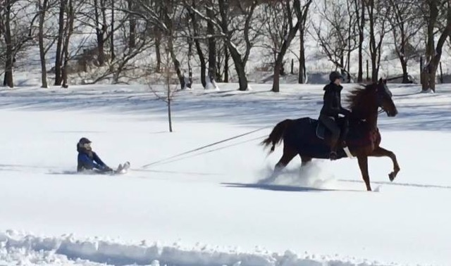 Sledding with a horse requires a rider to guide the horse.