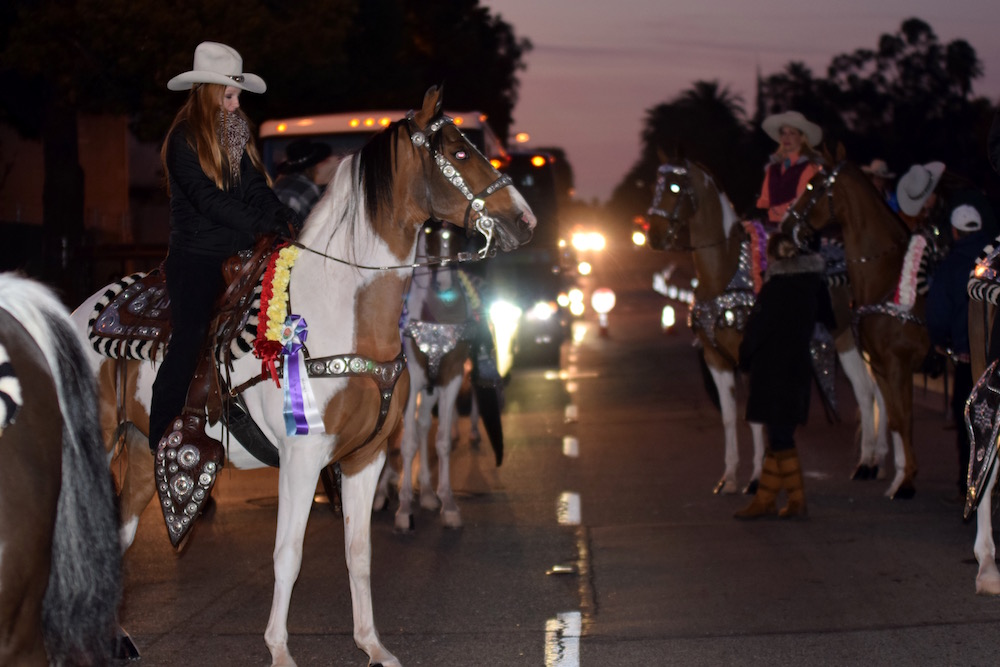 To get to the start of the parade, on Orange Grove Boulevard, the horses had to travel down a street full of vehicle traffic in the dark.