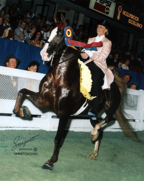 Elisabeth and CH Hollywood Excellence were an almost unbeatable three gaited team in the 1990s.
