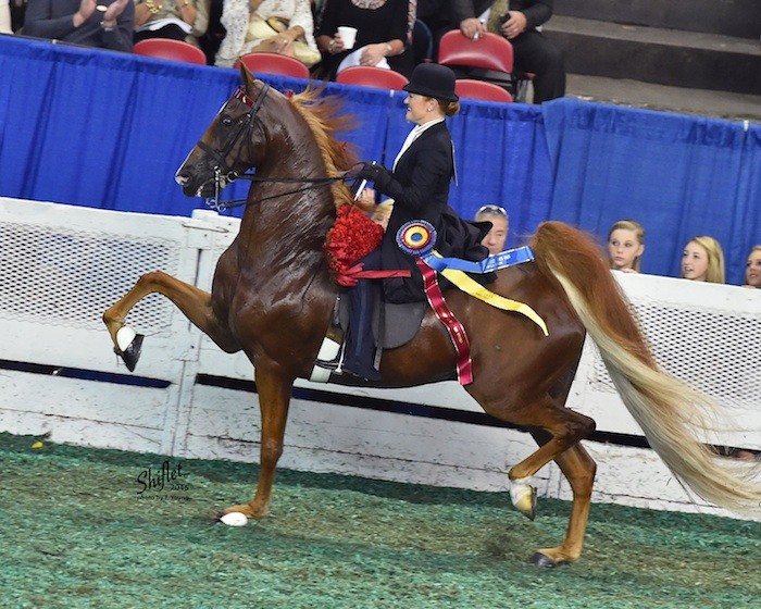 Ali and her partner Memories of Cabo were the 2015 Amateur Five-Gaited World's Champion Of Champions.
