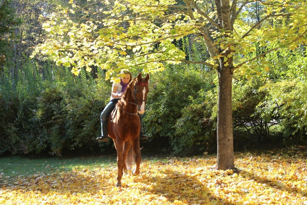 A short trail ride can be a great change of pace for show horses and riders.