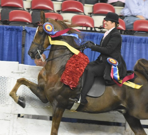 Trainer Mary Orr showed CH Lets Talk for McGee Bosworth and brought home the roses in the Three-Gaited Park Championship.